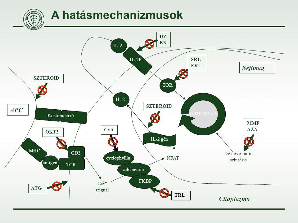 A hatásmechanizmusok De novo purin szintézis SEJTCIKLUS MMF AZA IL-2R IL-2 SRL ERL TOR Sejtmag IL-2 gén IL-2 SZTEROID DZ BX TCR CD3 antigén MHC Citopl