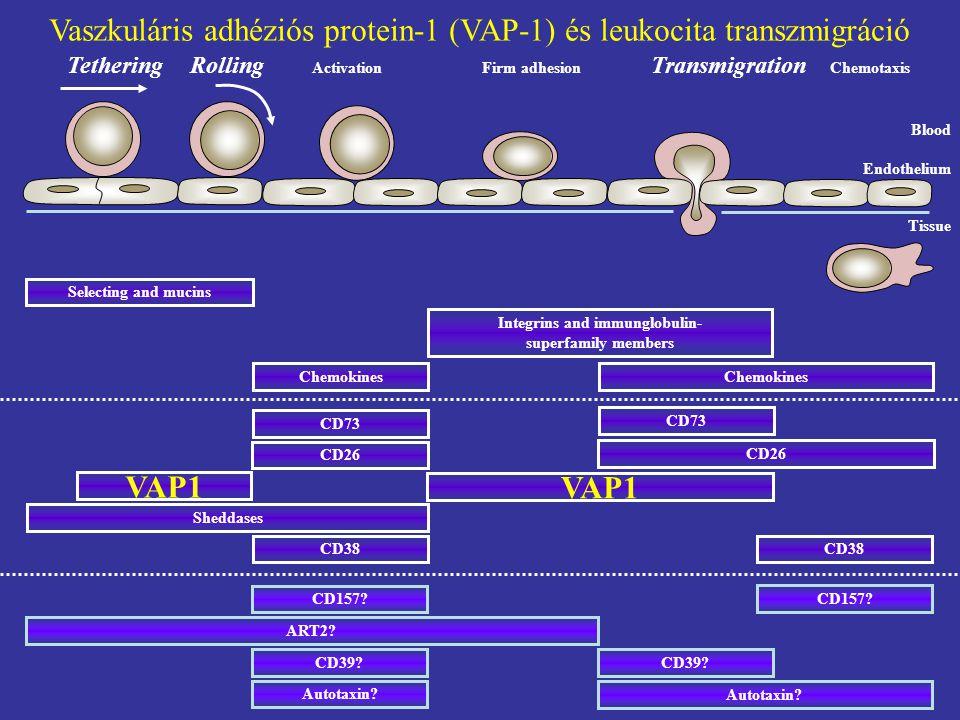 CÉLOK és EREDMÉNYEK 1.VAP-1/SSAO biomarker és/vagy terápiás célpont.