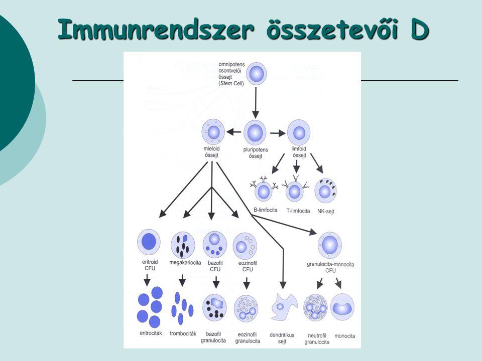 Immunrendszer összetevői D