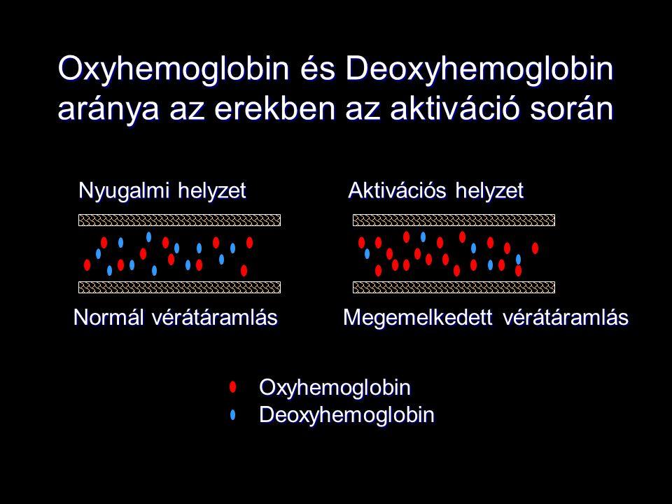 Oxyhemoglobin és Deoxyhemoglobin aránya az erekben az aktiváció során Oxyhemoglobin Deoxyhemoglobin Nyugalmi helyzet Aktivációs helyzet Normál vérátár