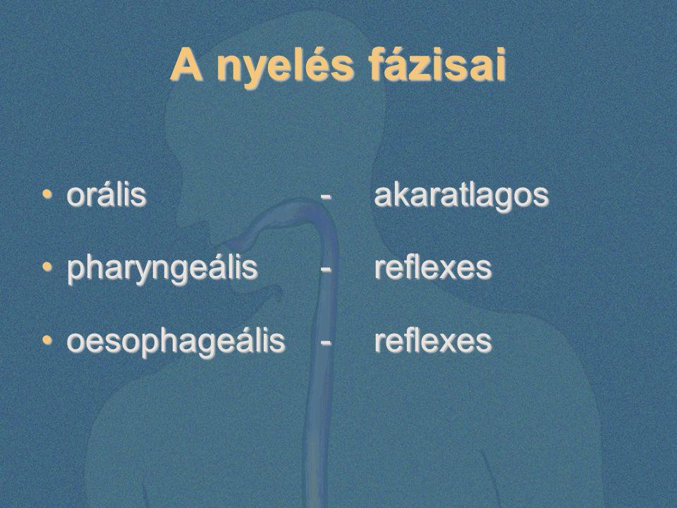 A nyelés fázisai orális - akaratlagosorális - akaratlagos pharyngeális - reflexespharyngeális - reflexes oesophageális - reflexesoesophageális - refle
