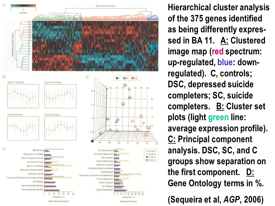 Hierarchical cluster analysis of the 375 genes identified as being differently expres- sed in BA 11. A: Clustered image map (red spectrum: up-regulate