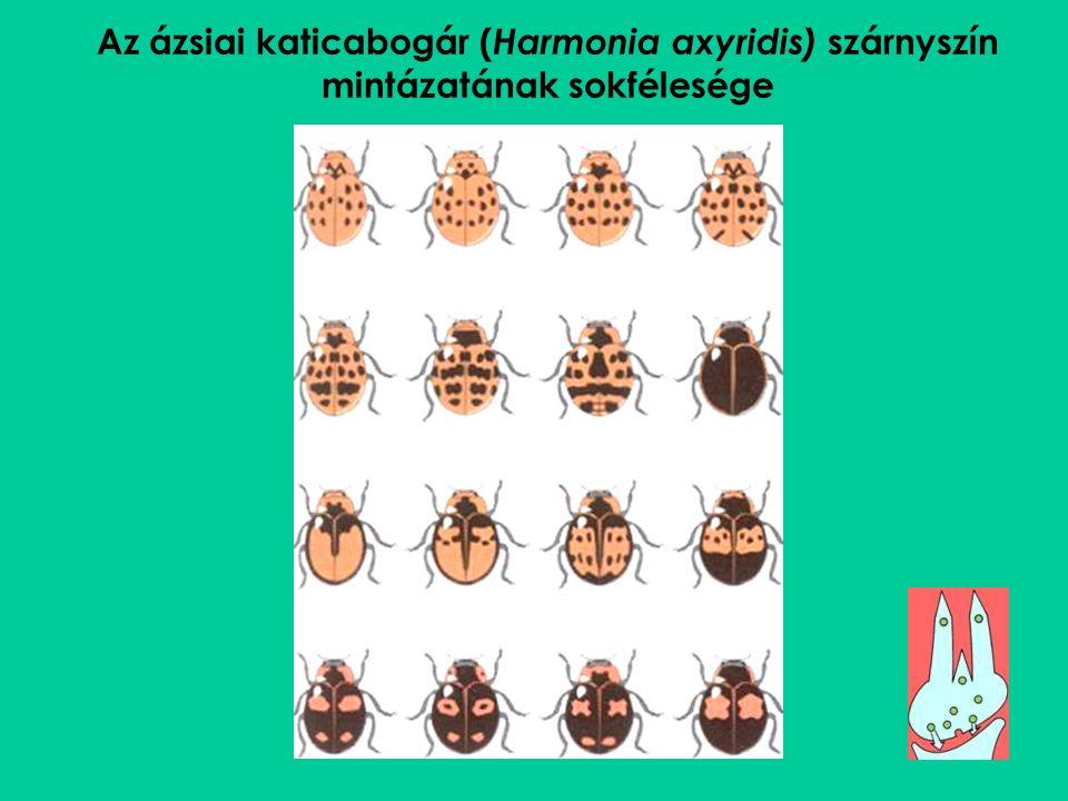 Az ázsiai katicabogár ( Harmonia axyridis) szárnyszín mintázatának sokfélesége