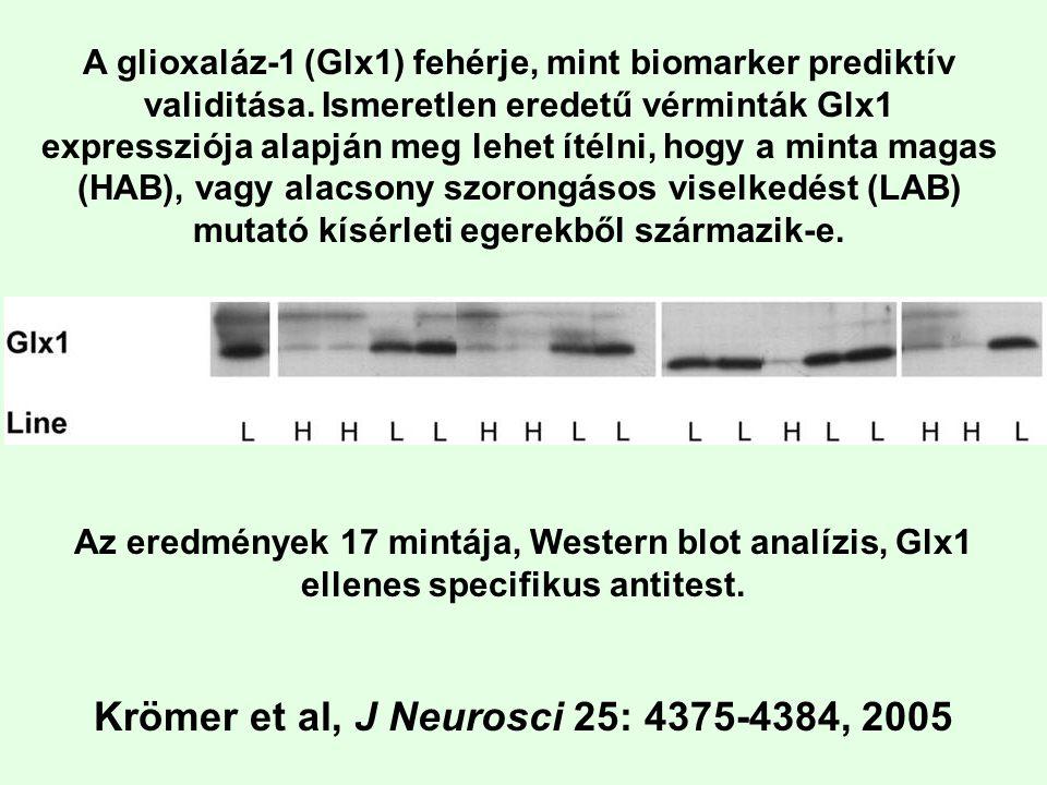 A glioxaláz-1 (Glx1) fehérje, mint biomarker prediktív validitása. Ismeretlen eredetű vérminták Glx1 expressziója alapján meg lehet ítélni, hogy a min