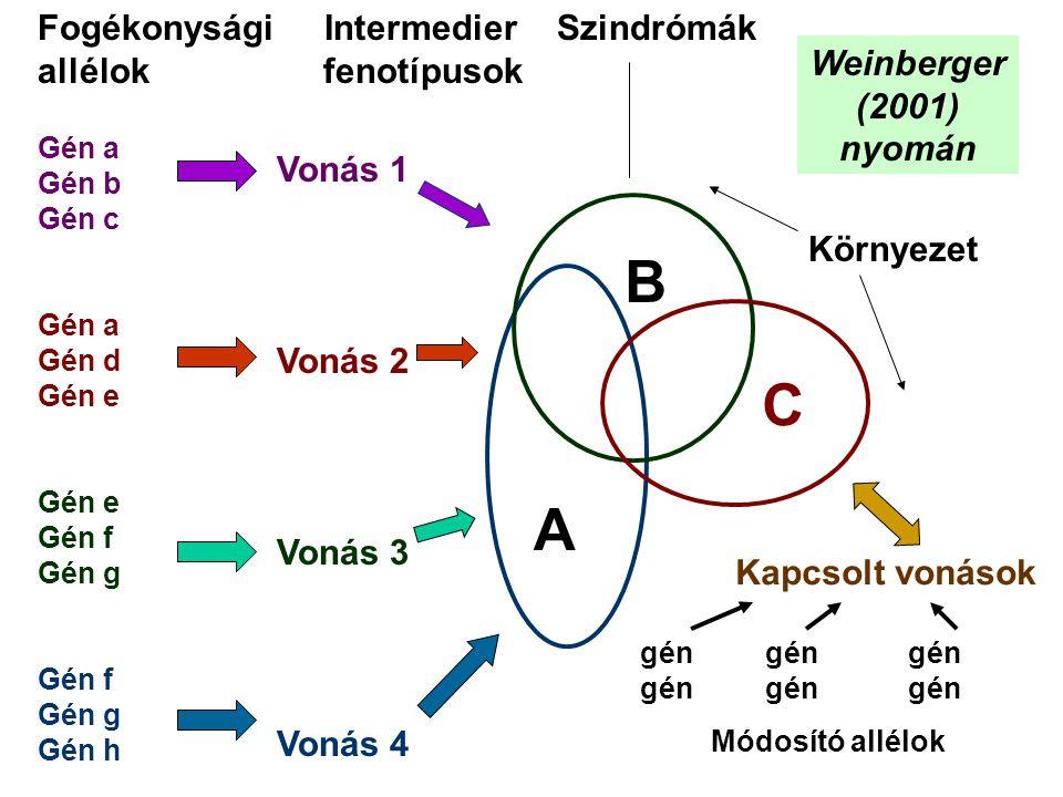 Gén a Gén b Gén c Gén a Gén d Gén e Gén e Gén f Gén g Gén f Gén g Gén h Vonás 1 Vonás 2 Vonás 3 Vonás 4 Kapcsolt vonások gén gén gén Módosító allélok