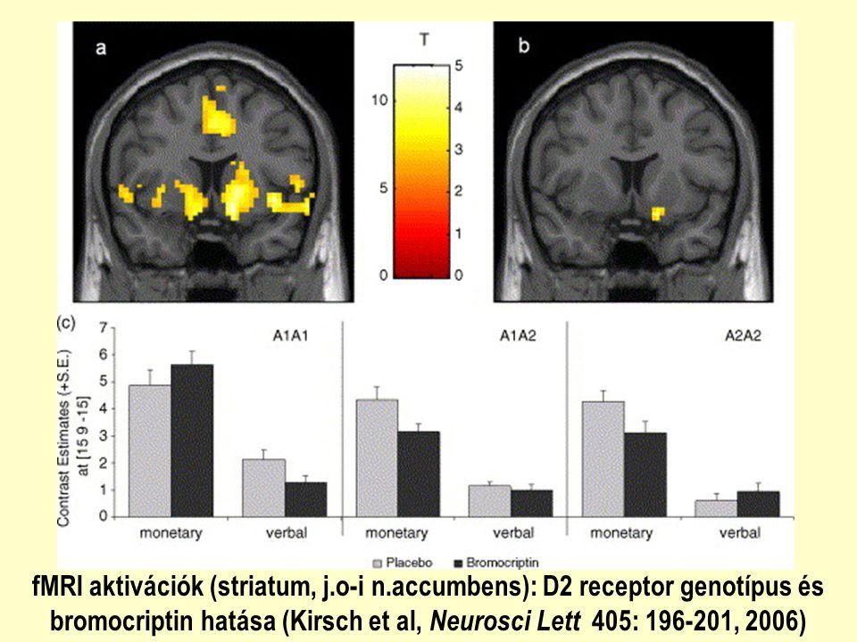 fMRI aktivációk (striatum, j.o-i n.accumbens): D2 receptor genotípus és bromocriptin hatása (Kirsch et al, Neurosci Lett 405: 196-201, 2006)