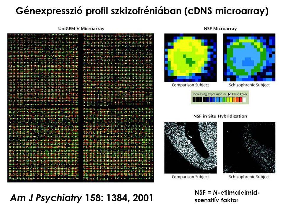 Génexpresszió profil szkizofréniában (cDNS microarray) Am J Psychiatry 158: 1384, 2001 NSF = N -etilmaleimid- szenzitív faktor