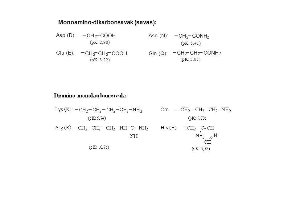 Monoamino-dikarbonsavak (savas): Asp (D): Glu (E): CH 2 COOH CH 2 2 COOH Asn (N): Gln (Q): CH 2 CONH 2 CH 2 2 CONH 2 (pK: 2,98) (pK: 3,22) (pK: 5,41)