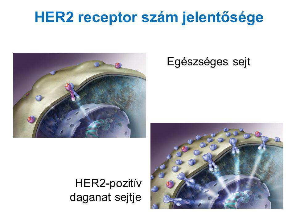 Egészséges sejt HER2-pozitív daganat sejtje HER2 receptor szám jelentősége