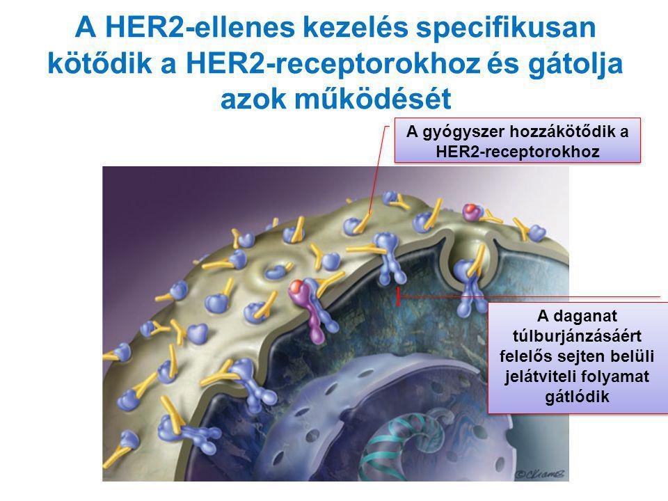 A HER2-ellenes kezelés specifikusan kötődik a HER2-receptorokhoz és gátolja azok működését A gyógyszer hozzákötődik a HER2-receptorokhoz A daganat túl