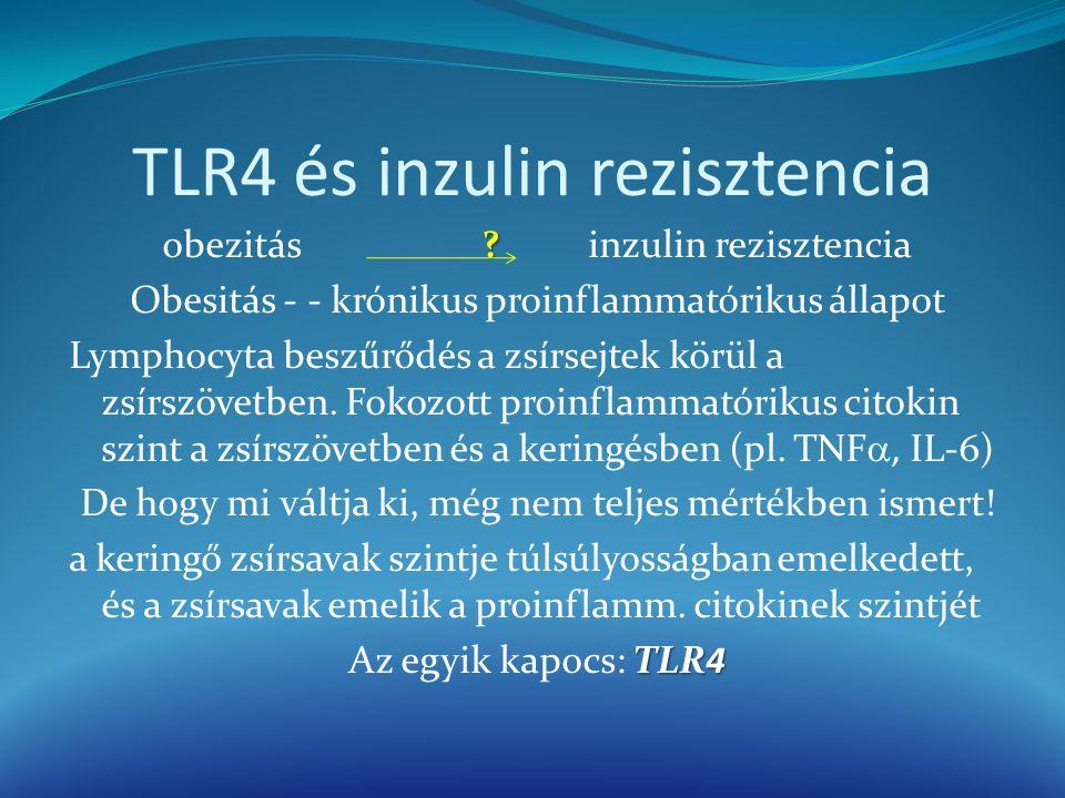 TLR4 és inzulin rezisztencia ? obezitás?inzulin rezisztencia Obesitás - - krónikus proinflammatórikus állapot Lymphocyta beszűrődés a zsírsejtek körül