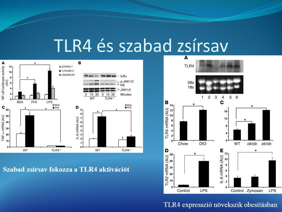 TLR4 és szabad zsírsav TLR4 expresszió növekszik obesitásban Szabad zsírsav fokozza a TLR4 aktivációt