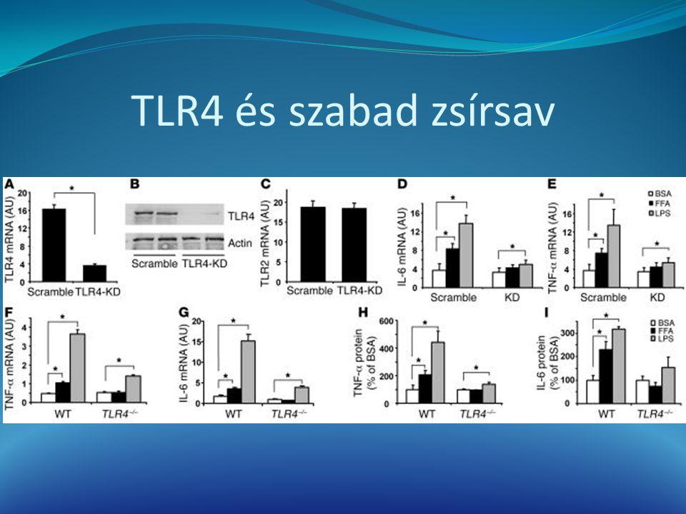 TLR4 és szabad zsírsav