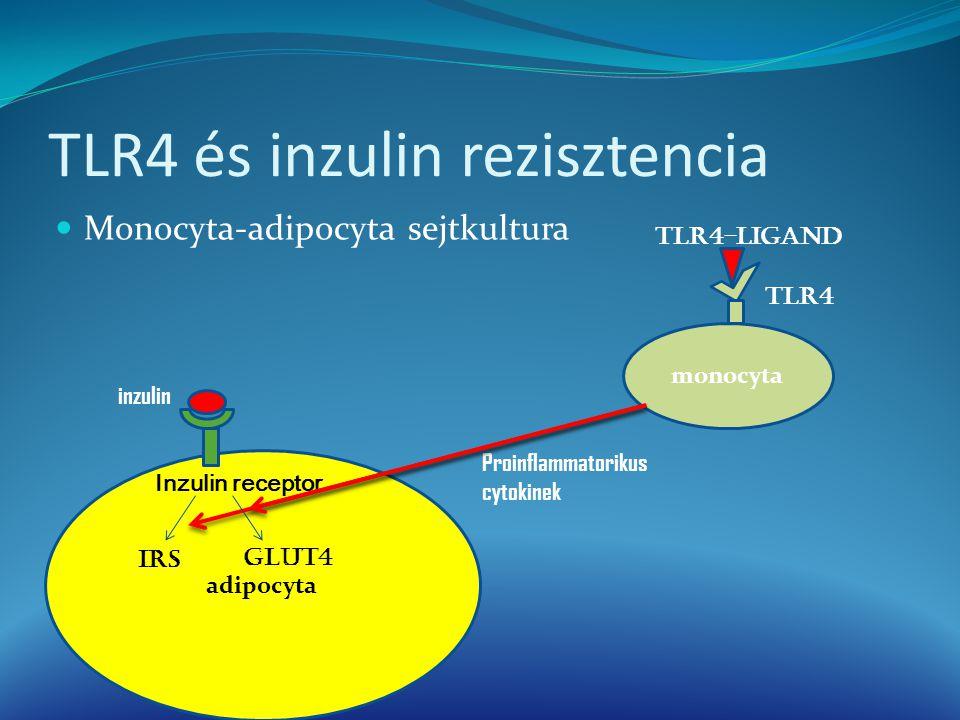 Monocyta-adipocyta sejtkultura monocyta TLR4 TLR4-ligand Proinflammatorikus cytokinek adipocyta Inzulin receptor inzulin IRS GLUT4
