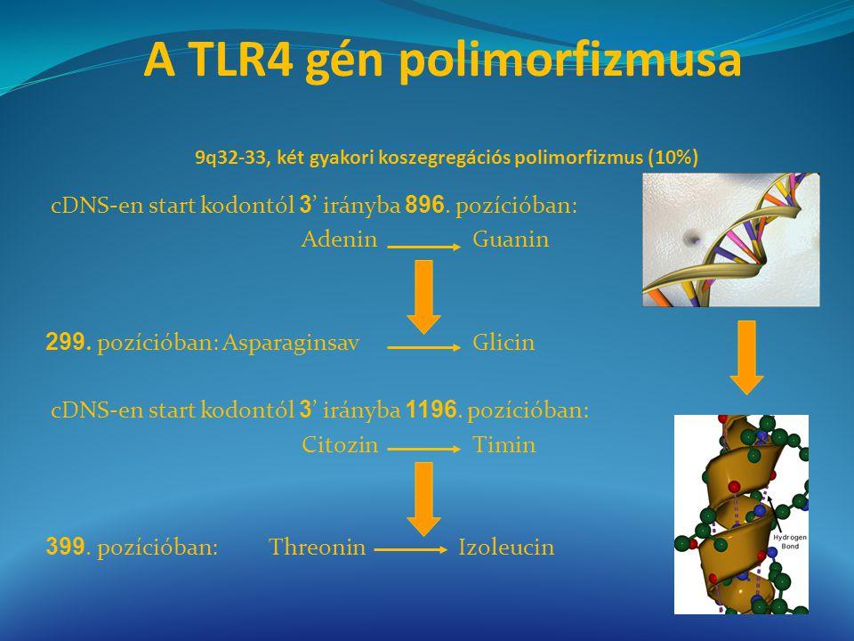A TLR4 gén polimorfizmusa 9q32-33, két gyakori koszegregációs polimorfizmus (10%) cDNS-en start kodontól 3 ' irányba 896. pozícióban: Adenin Guanin 29