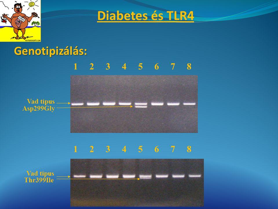 Genotipizálás: Vad típus Asp299Gly Vad típus Thr399Ile 1 2 3 4 5 6 7 8 Diabetes és TLR4