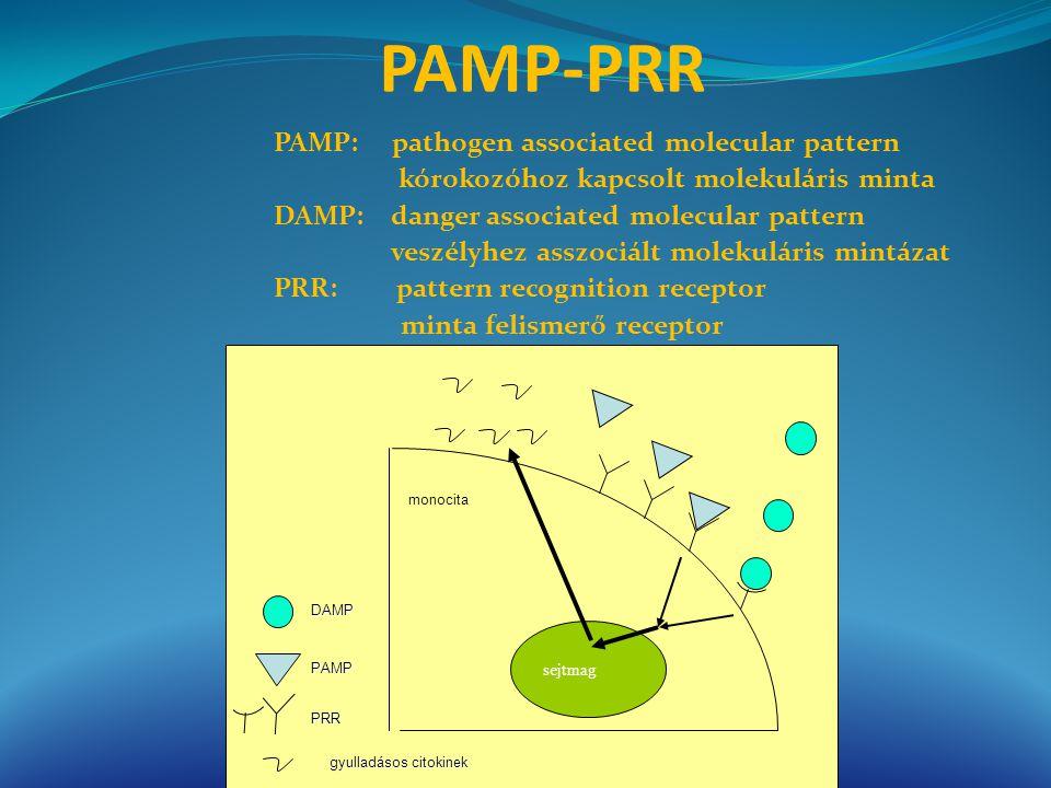 PAMP: pathogen associated molecular pattern kórokozóhoz kapcsolt molekuláris minta DAMP: danger associated molecular pattern veszélyhez asszociált mol