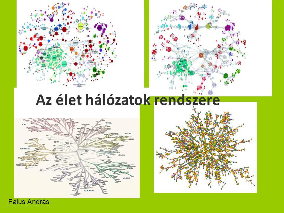 Az élet hálózatok rendszere Falus András