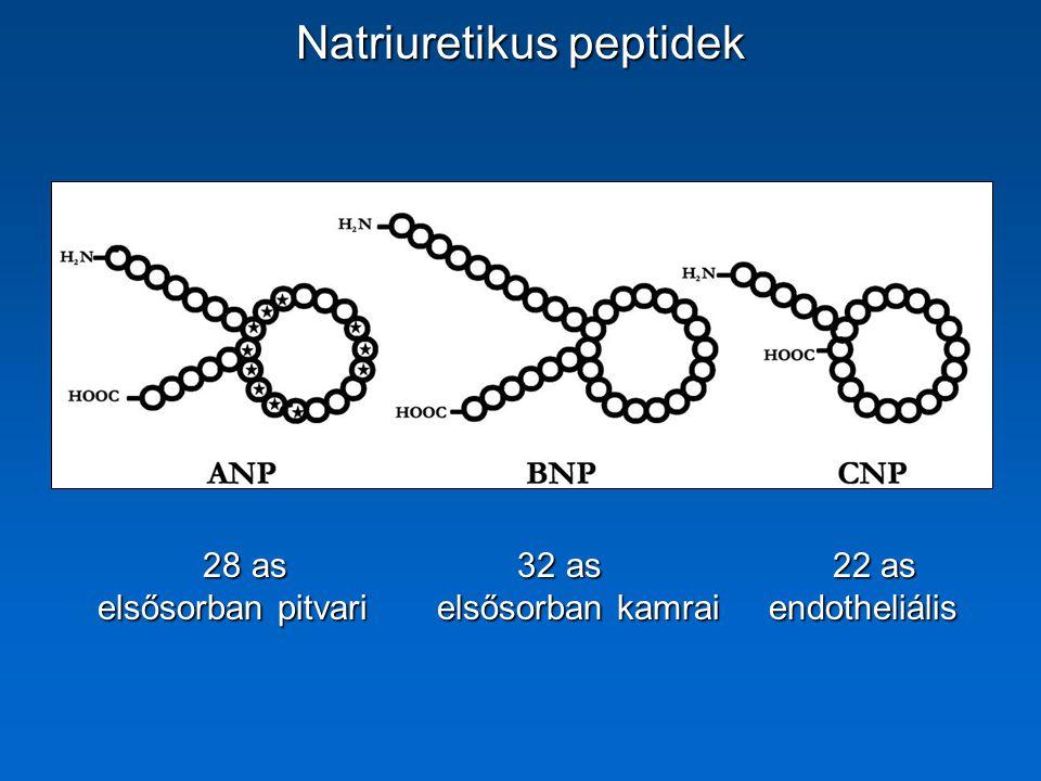NEJM 2002 ANP hatásai natriuresis + natriuresis + diuresis diuresis vazodilatáció vazodilatáció RAS gátlás RAS gátlás sympathicolysis sympathicolysis = endogén kardiotonikum