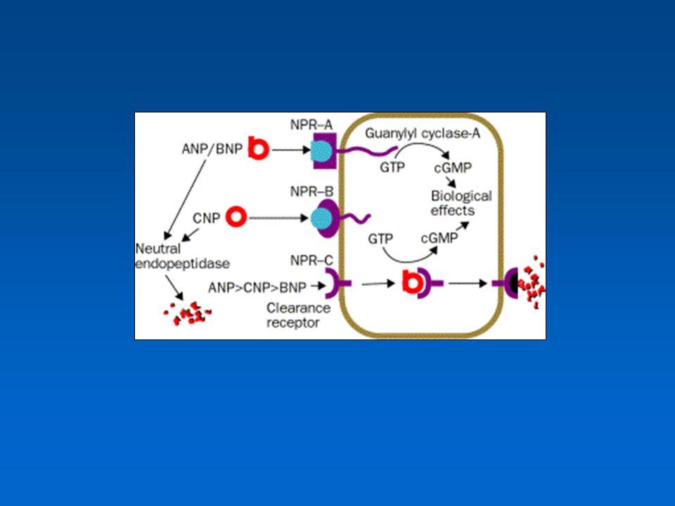 ANP, BNP összefoglalás ANP, BNP összefoglalás Endogén antihypertenzivumok Diagnosztika Therápia nyomonkövetése Prognosztikai jelentőség Therápiás hatás (iv.