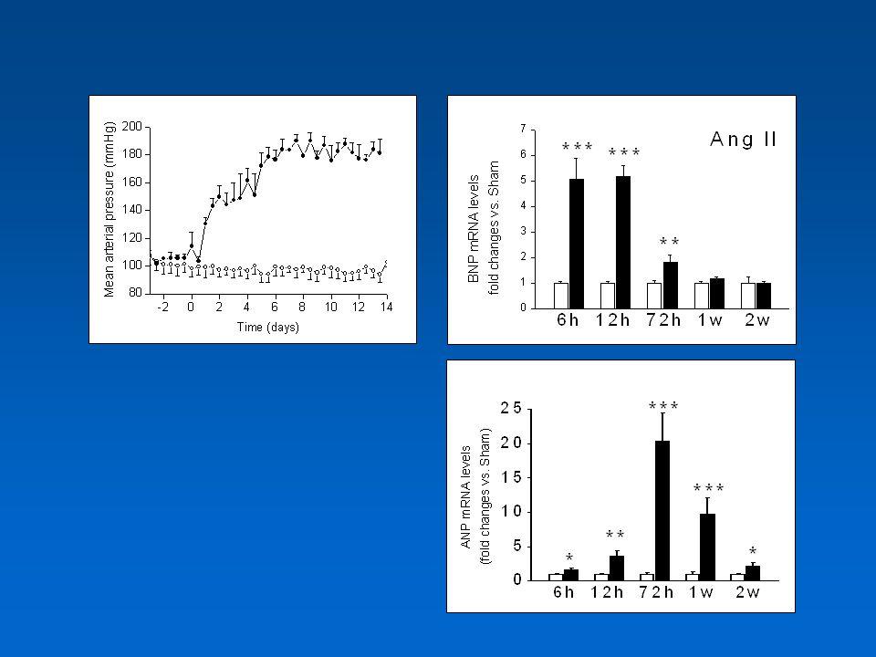 … Adrenomedullin Urodilatin Urodilatin Urotenzin II Urotenzin II Relaxin Relaxin sCP (salmon cardiac peptide) sCP (salmon cardiac peptide) DNP (dendroaspis NP) DNP (dendroaspis NP) Guanylin / Uroguanylin … Guanylin / Uroguanylin …