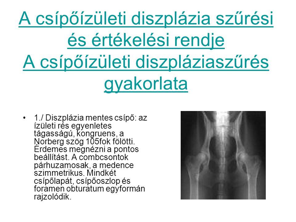 A csípőízületi diszplázia szűrési és értékelési rendje A csípőízületi diszpláziaszűrés gyakorlata 1./ Diszplázia mentes csípő: az ízületi rés egyenlet