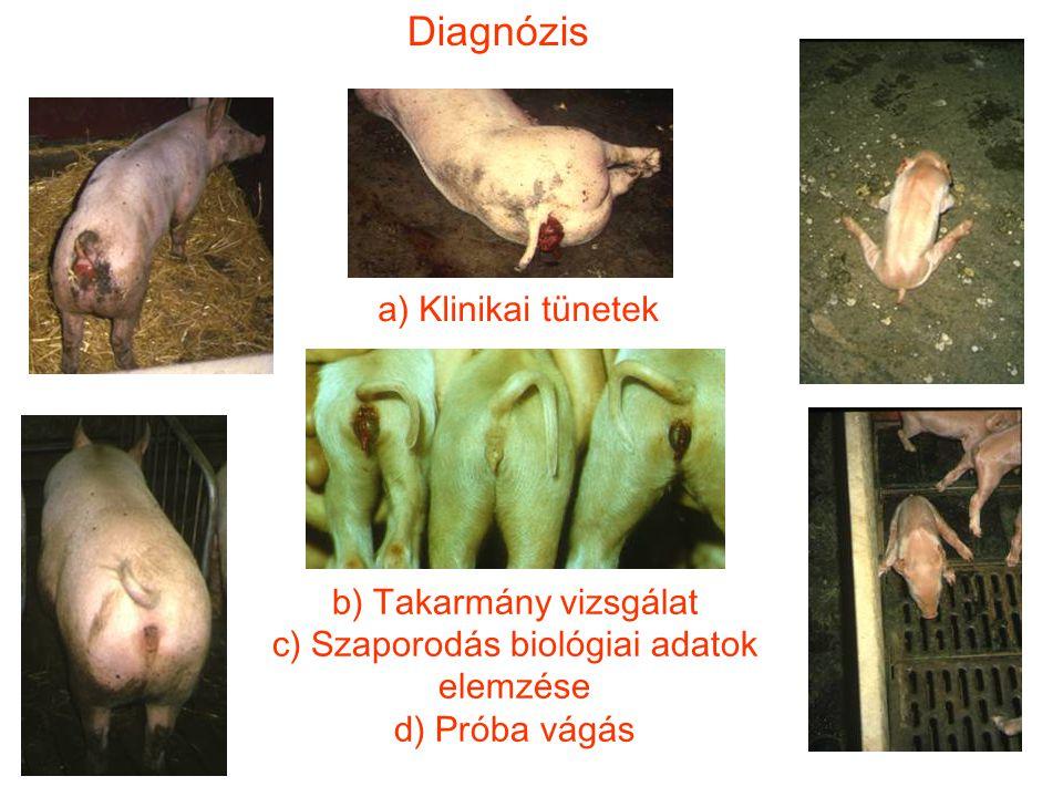 Diagnózis a) Klinikai tünetek b) Takarmány vizsgálat c) Szaporodás biológiai adatok elemzése d) Próba vágás