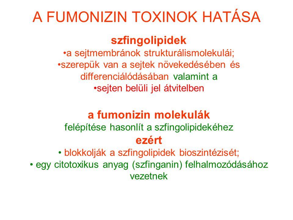 A FUMONIZIN TOXINOK HATÁSA szfingolipidek a sejtmembránok strukturálismolekulái; szerepük van a sejtek növekedésében és differenciálódásában valamint