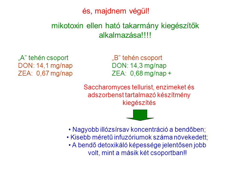 """és, majdnem végül! mikotoxin ellen ható takarmány kiegészítők alkalmazása!!!! """"A"""" tehén csoport DON: 14,1 mg/nap ZEA: 0,67 mg/nap """"B"""" tehén csoport DO"""