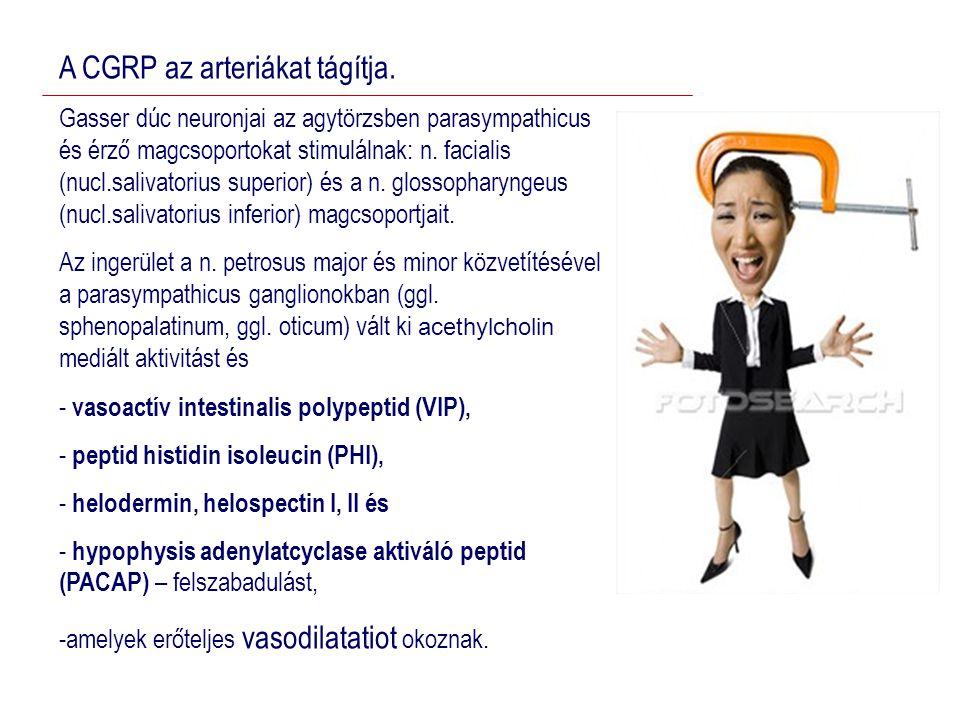 A CGRP az arteriákat tágítja.