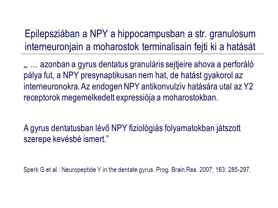 Epilepsziában a NPY a hippocampusban a str.