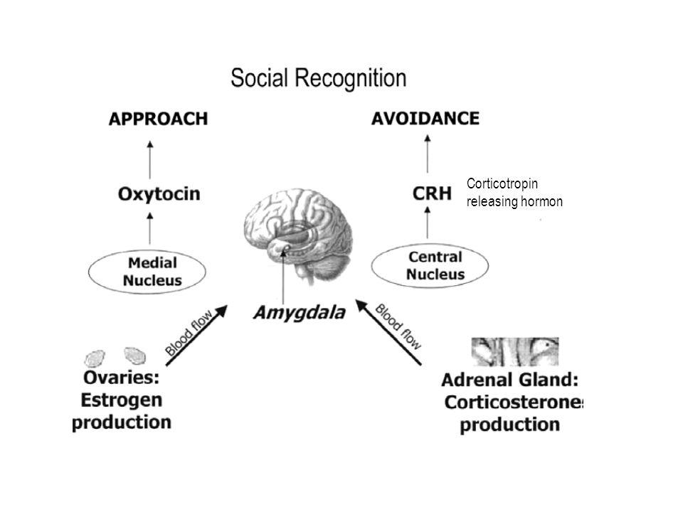 Corticotropin releasing hormon