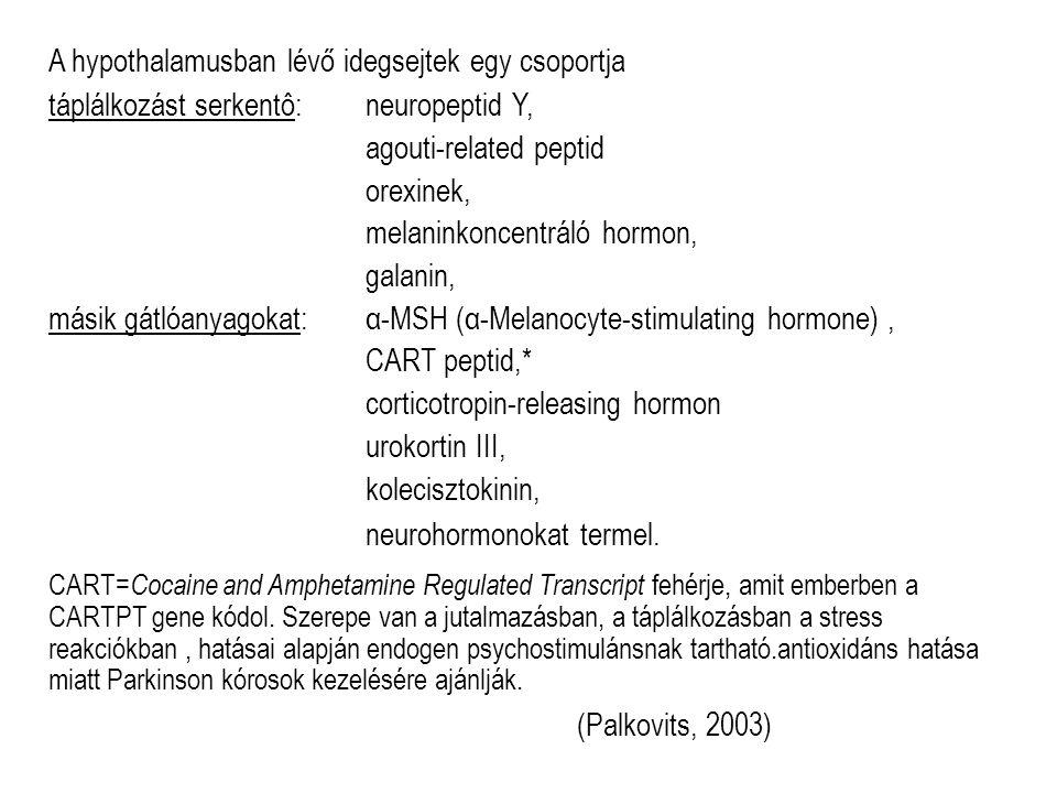 A hypothalamusban lévő idegsejtek egy csoportja táplálkozást serkentô: neuropeptid Y, agouti-related peptid orexinek, melaninkoncentráló hormon, galanin, másik gátlóanyagokat: α-MSH (α-Melanocyte-stimulating hormone), CART peptid,* corticotropin-releasing hormon urokortin III, kolecisztokinin, neurohormonokat termel.