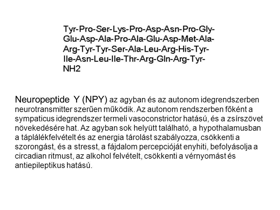 Neuropeptide Y (NPY) az agyban és az autonom idegrendszerben neurotransmitter szerűen működik.