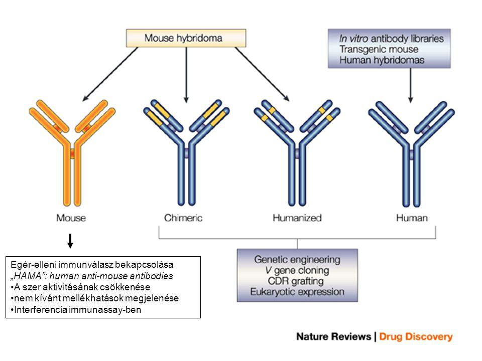 """Egér-elleni immunválasz bekapcsolása """"HAMA"""": human anti-mouse antibodies A szer aktivitásának csökkenése nem kívánt mellékhatások megjelenése Interfer"""