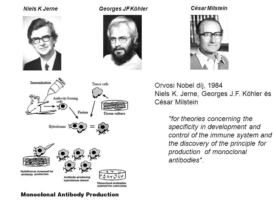 A biológiai terápiás eljárások fejlődésének mérföldkövei Szérum terápia a diftéria (torokgyík) gyógyítására (1890) Az agammaglobulinaemia (közönséges variabilis immundeficiencia) gyógyítása tisztított immunglobulin G-vel (IVIG, Humaglobin, stb…1952) A monoklonális antitesttermelés elvének és gyakorlatának kidolgozása (Köhler és Milstein, 1975), és az első egér-monoklonális antitestterápia kifejlesztése a transzplantációt követő rejekciós epizódok kezelésére (Muromonoab-OKT3, 1986) A molekuláris biológia fejlődése az elmúlt években lehetővé tette, hogy Moreover, the progress of molecular and transgenic technologies has enabled the development of –Antitest-kimérák (Abciximab-ReoPro (Gp IIb-IIIa, 1994) és Rituximab-Rituxan (CD20, 1997), –Humanizált ellenanyagok (complementarity-determining region; CDR-grafted) mAb, Trastuzumab-Herceptin (Her2/Neu, 1998) and Infliximab-Remicade (TNFa, 1998) –és teljesen humán ellenanyagok (phage display–derived Adalimumab-Humira (TNFa, 2002) és transgenic mouse-derived Panitumumab-Vectibix (EGFR, 2006) A fenti, és hasonló más szerek kifejlesztésének sikere lehetővé tette, hogy korábban kezelhetetlen, vagy csak nem-specifikus módon kezelhető betegségek sikerrel befolyásolhatók, sőt egyes esetekben gyógyíthatók legyenek.