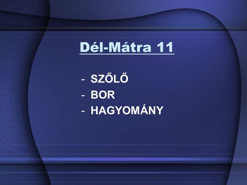 Dél-Mátra 11 -SZŐLŐ -BOR -HAGYOMÁNY