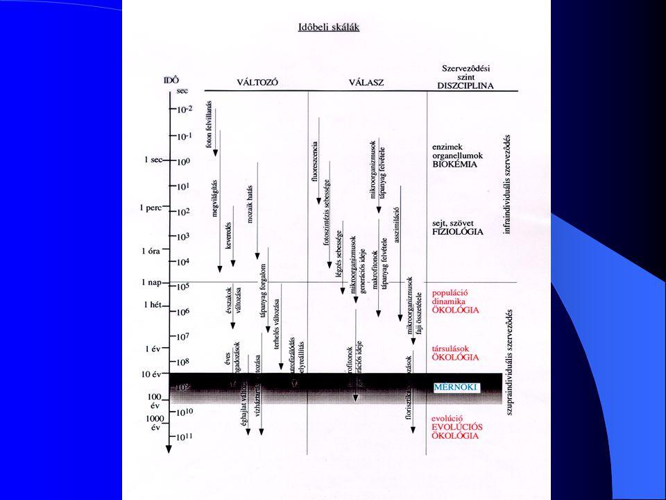 A technikai szemléletű vízfolyás mederrendezés jellemzői Hosszú egyenes szakaszok, nyugodt vonalvezetés.