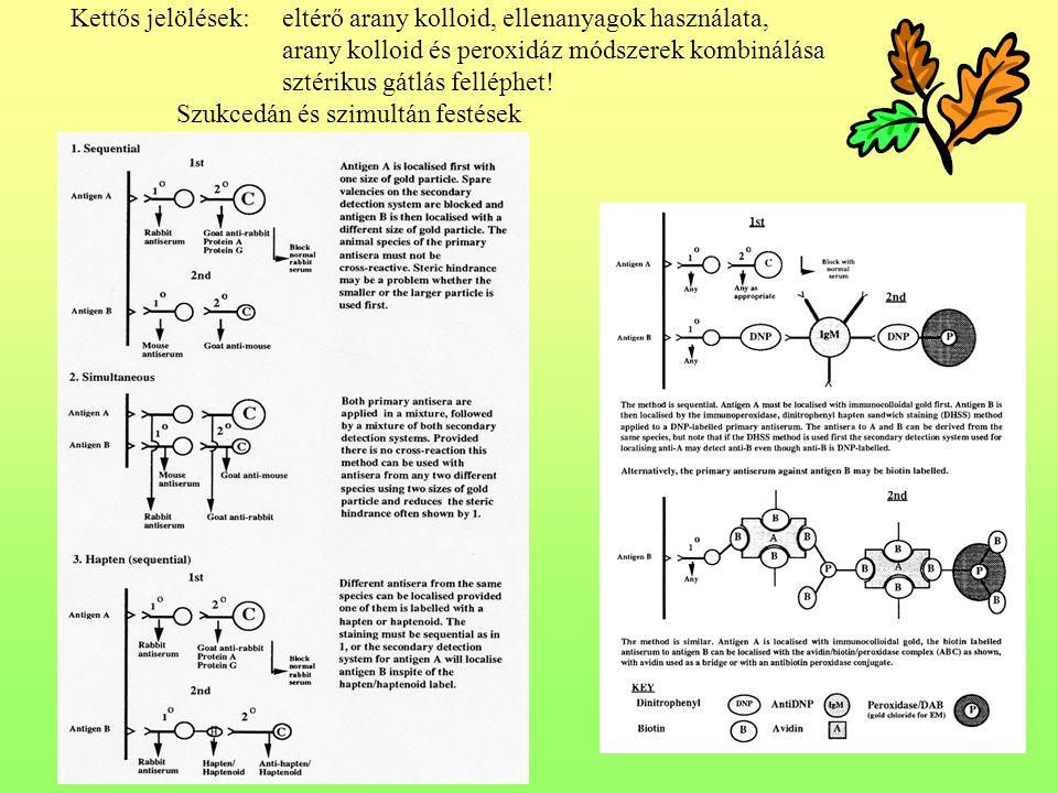 Kettős jelölések:eltérő arany kolloid, ellenanyagok használata, arany kolloid és peroxidáz módszerek kombinálása sztérikus gátlás felléphet.