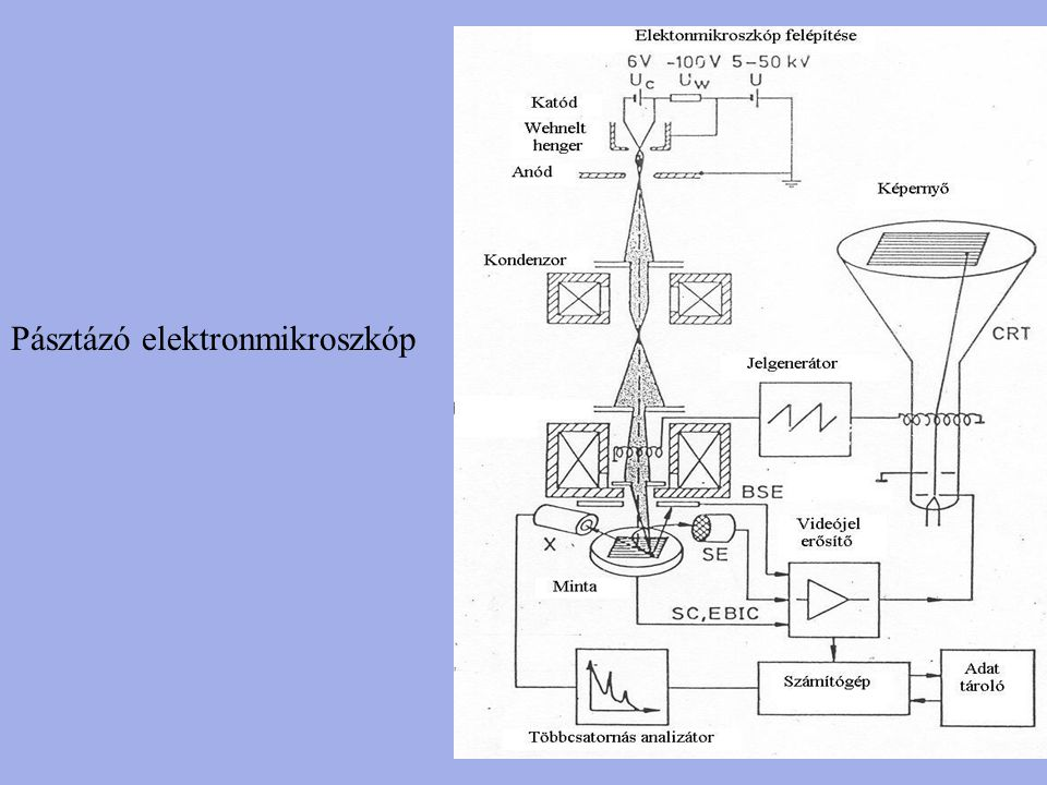 Pásztázó elektronmikroszkóp