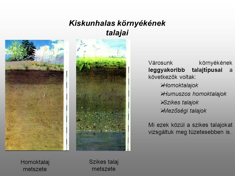 Kiskunhalas környékének talajai Városunk környékének leggyakoribb talajtípusai a következők voltak: HHomoktalajok HHumuszos homoktalajok SSzikes
