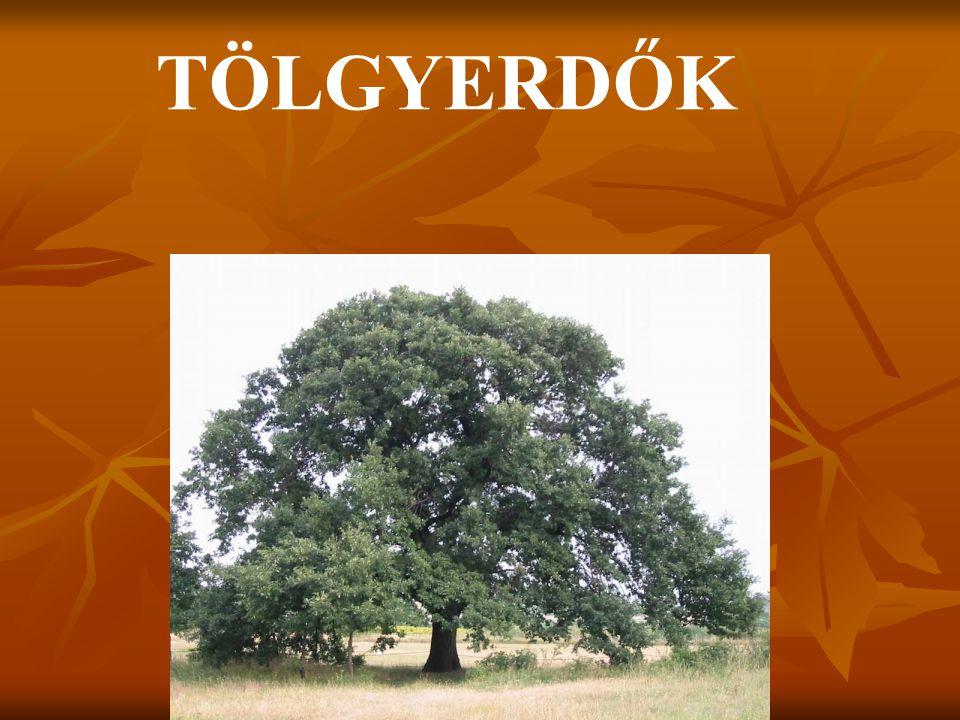 A tölgy vagy tölgyfa (Quercus) a bükkfafélék (Fagaceae) család nemzetsége mintegy ötszáz fajjal.