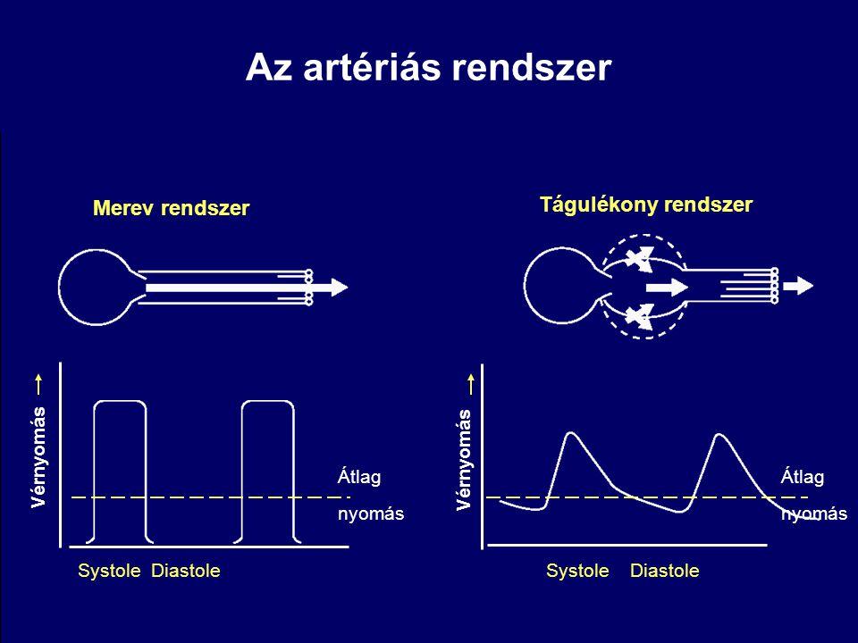 Az artériás rendszer Merev rendszer Tágulékony rendszer Vérnyomás Systole Diastole Átlag nyomás Vérnyomás Systole Diastole Átlag nyomás