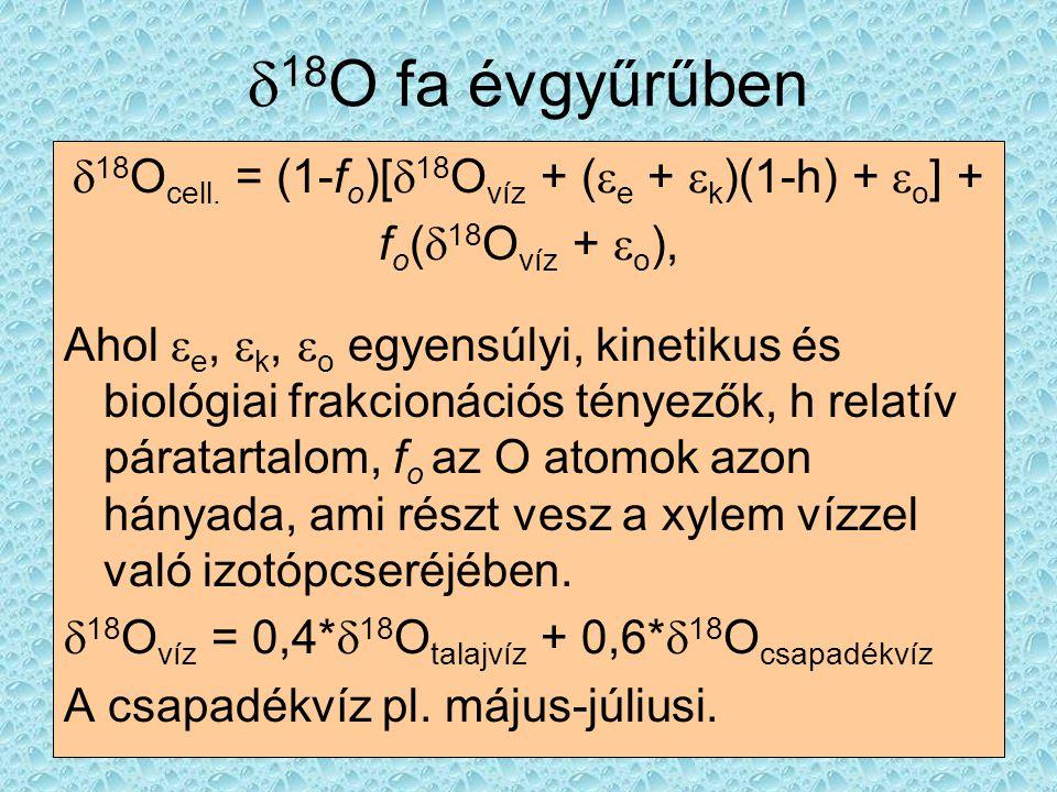  18 O fa évgyűrűben  18 O cell. = (1-f o )[  18 O víz + (  e +  k )(1-h) +  o ] + f o (  18 O víz +  o ), Ahol  e,  k,  o egyensúlyi, kinet