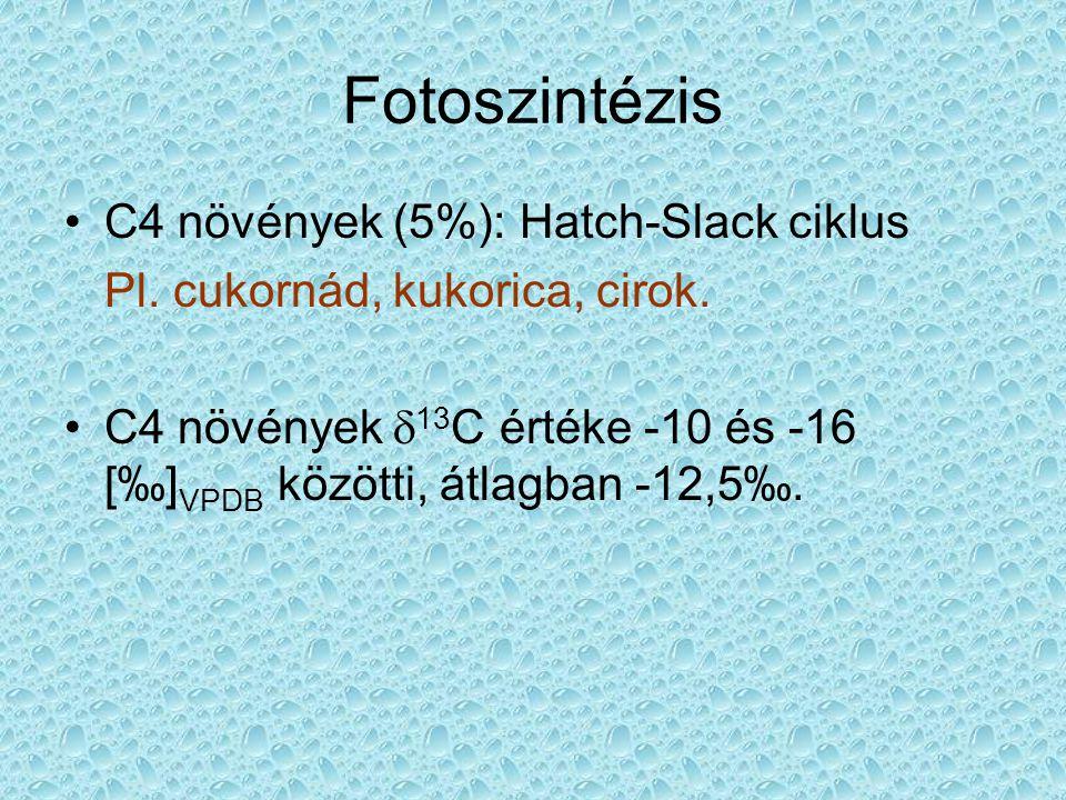 Fotoszintézis C4 növények (5%): Hatch-Slack ciklus Pl. cukornád, kukorica, cirok. C4 növények  13 C értéke -10 és -16 [‰] VPDB közötti, átlagban -12,