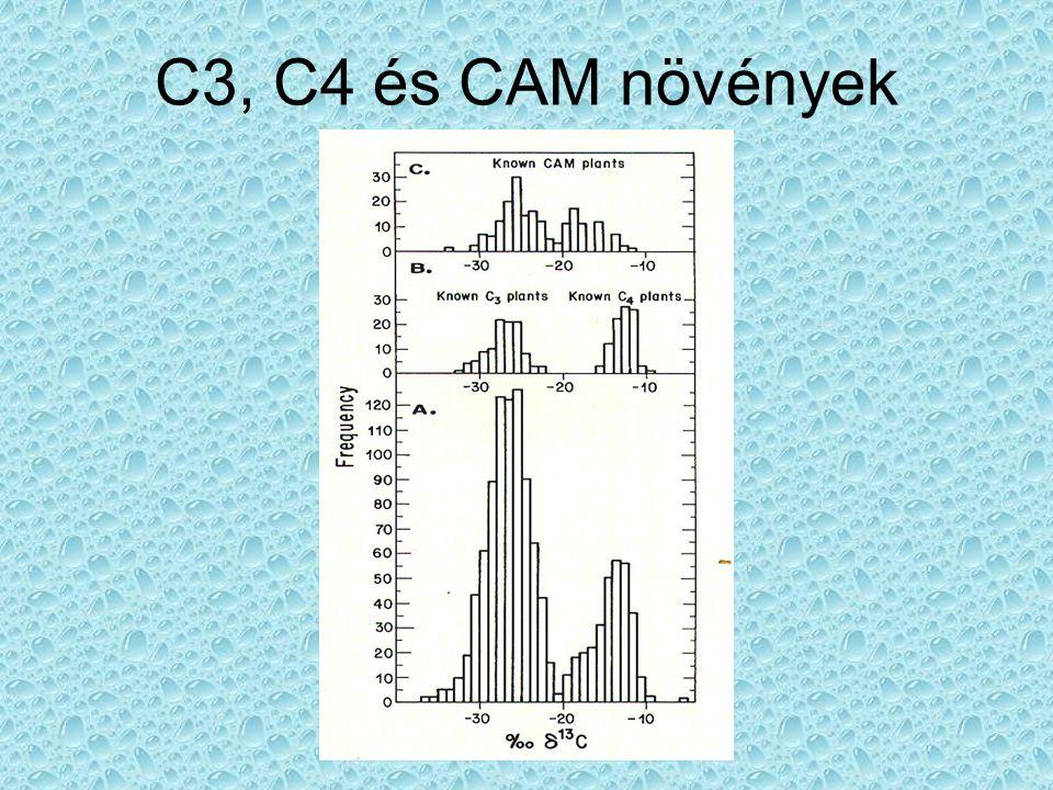 C3, C4 és CAM növények