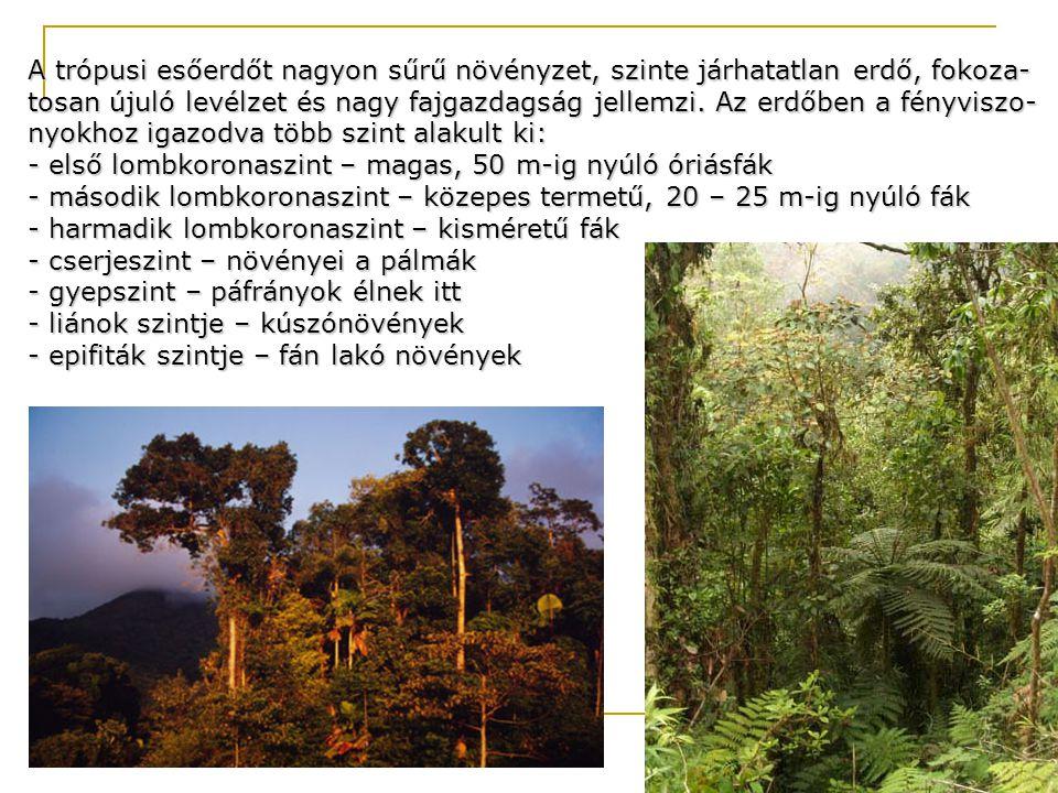 A trópusi esőerdőt nagyon sűrű növényzet, szinte járhatatlan erdő, fokoza- tosan újuló levélzet és nagy fajgazdagság jellemzi. Az erdőben a fényviszo-