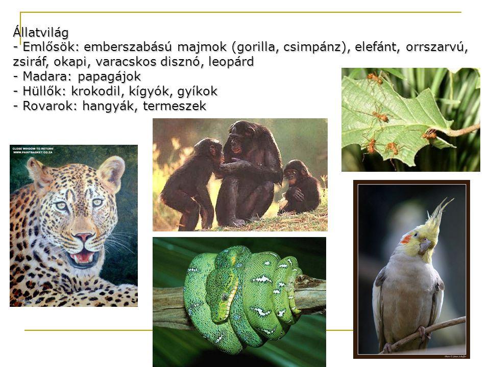 Állatvilág - Emlősök: emberszabású majmok (gorilla, csimpánz), elefánt, orrszarvú, zsiráf, okapi, varacskos disznó, leopárd - Madara: papagájok - Hüll