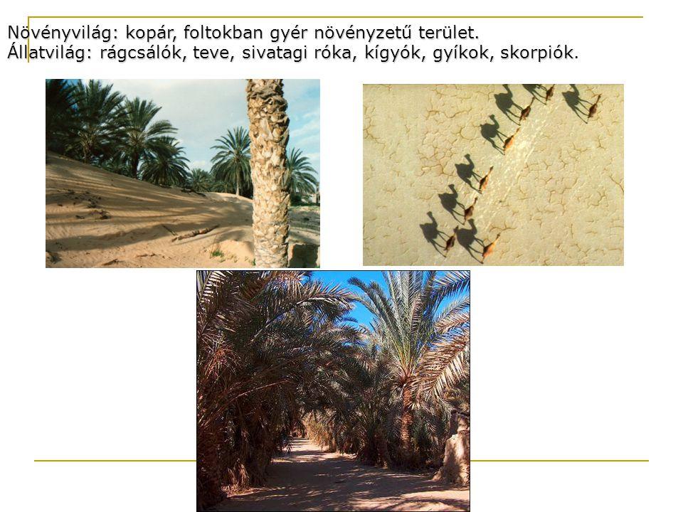 Növényvilág: kopár, foltokban gyér növényzetű terület. Állatvilág: rágcsálók, teve, sivatagi róka, kígyók, gyíkok, skorpiók Állatvilág: rágcsálók, tev