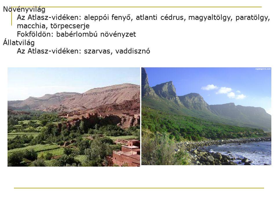 Növényvilág Az Atlasz-vidéken: aleppói fenyő, atlanti cédrus, magyaltölgy, paratölgy, macchia, törpecserje Fokföldön: babérlombú növényzet Állatvilág